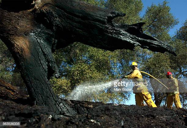 Fire Authority firefighter Wendell Simmons assisted by Capt Jack Cheak doused the remaining hotspots of a wind–fanned 3–acre brush fire that briefly...
