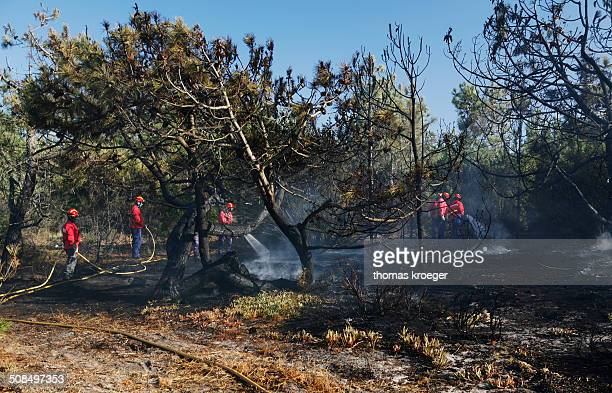 Fire brigade putting out a bush fire, near Melides, Alentejo region, Portugal