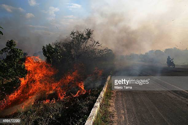 A fire burns along a highway in a deforested section of the Amazon basin on November 23 2014 in Ze Doca Brazil Fires are often set by ranchers to...