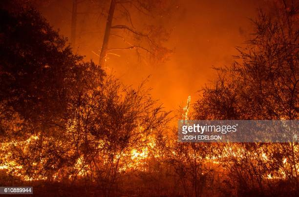 Fire churns up dried brush in the Santa Cruz Mountains near Loma Prieta California on September 28 2016 The Loma Fire has charred more than 2000...