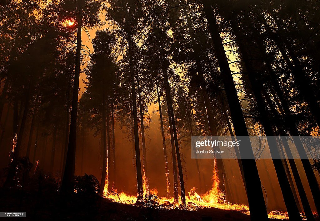 Fire consumes trees along US highway 120 as the Rim Fire burns out of control on August 21, 2013 in Buck Meadows, California. The Rim Fire continues to burn out of control and threatens 2,500 homes outside of Yosemite National Park. Over 400 firefighters are battling the blaze that is only 5 percent contained.