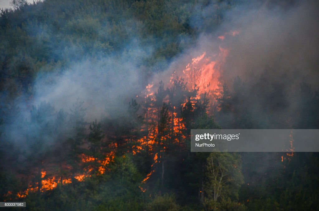 Fire destroyed near 2000 acres between the villages of Sakartsi and Matochina, which are located along the Bulgarian-Turkish border fence and 270 kilometres East the Bulgarian capital of Sofia. More than 50 people, firefighters, volunteers and the people from the villages are working on place, Matochina, Bulgaria on August 16, 2017