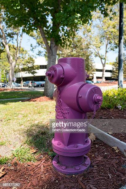 Fire hydrant painted 'Irvine Purple' providing reclaimed water in front of an office park in the Silicon Valley town of Mountain View California...