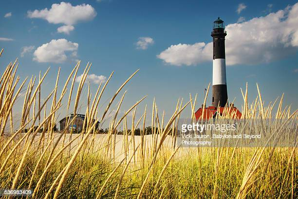 Fire Island Lighthouse Through the Reeds