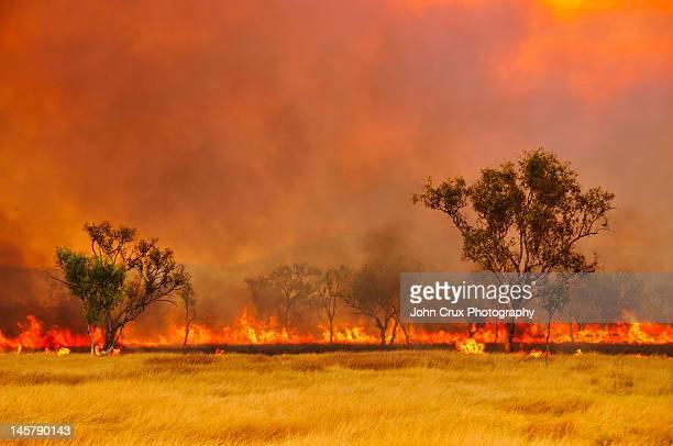 Fire on bush