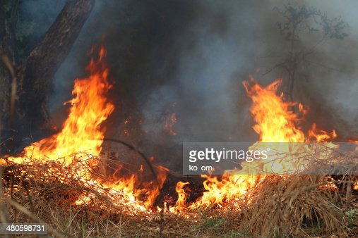 Fire on dry grass and trees : Stock Photo