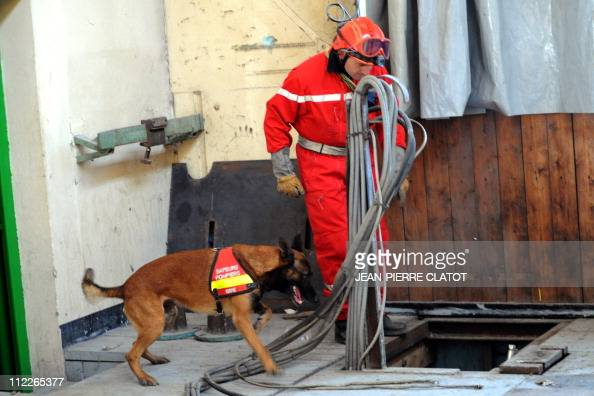 A firefighter and his dog participate to a quake drill on April 14 2011 in VillardBonnot south eastern France The drill called 'Richter 38' is part...