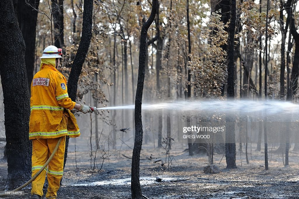 A firefighter douses smouldering trees from the Deans Gap fire near Nowra on the south coast of Australia's New South Wales state on January 9, 2013. Cooler conditions helped firefighters battling blazes across Australia on January 9 but up to 30 fires were still out of control. AFP PHOTO / Greg WOOD