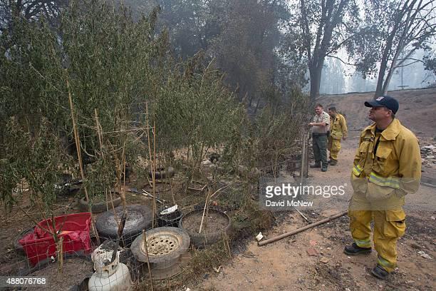 A firefighter looks at a charred marijuana garden after the Butte Fire destroyed the Golden Spur mini market north of Murphys California on September...