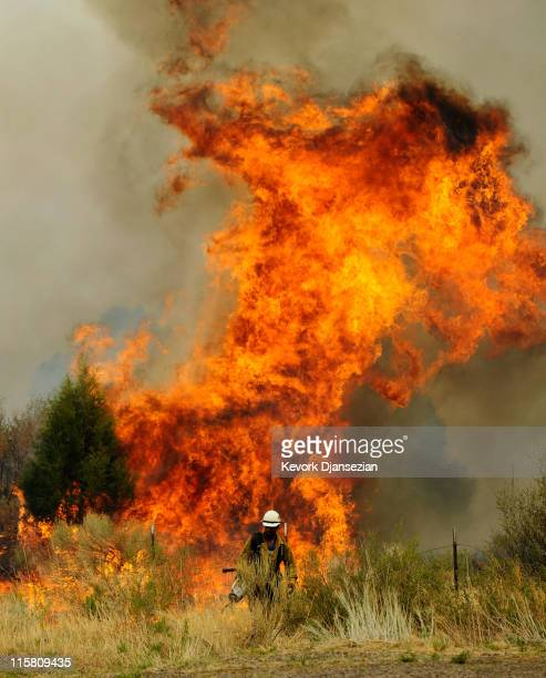 A firefighter sets a backburn on Highway 191 in an attempt to control a raging wildfire on June 10 2011 in Nutrioso Arizona The fire which is five...