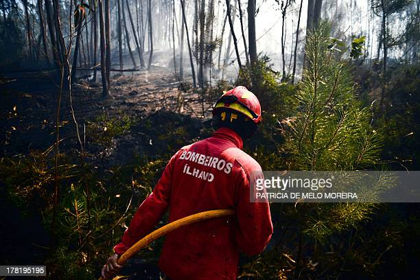 A firefighter tries to extinguish a wildfire in a forest in Paredes near Oliveira de Frades central Portugal on August 27 2013 AFP PHOTO/ PATRICIA DE...