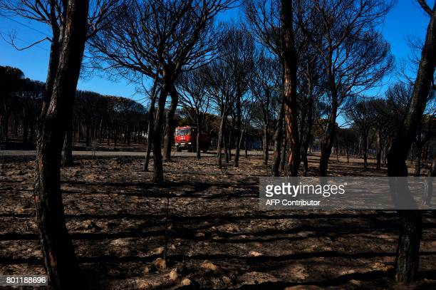 A firefighter vehicle passes by a charred forest after a wildfire in Mazagon near the Donana National Park on June 26 2017 More than 1500 people were...