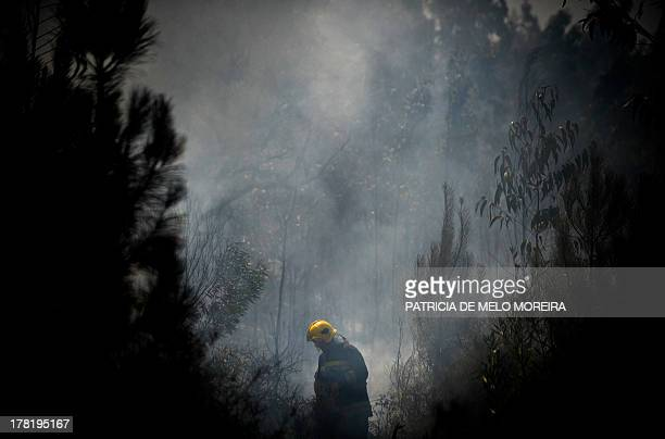 A firefighter walks in a burnt forest after a wildfire in Paredes near Oliveira de Frades central Portugal on August 27 2013 AFP PHOTO/ PATRICIA DE...