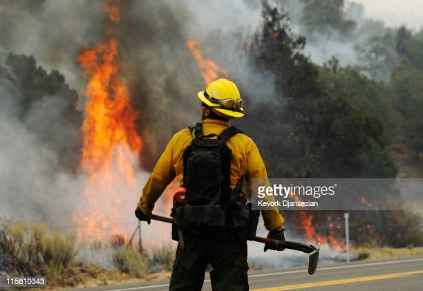 A firefighter watches flames grow after setting a backburn on Highway 191 in an attempt to control a raging wildfire on June 10 2011 in Nutrioso...