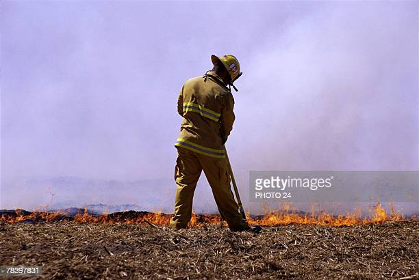 Firefighter working in forest fire