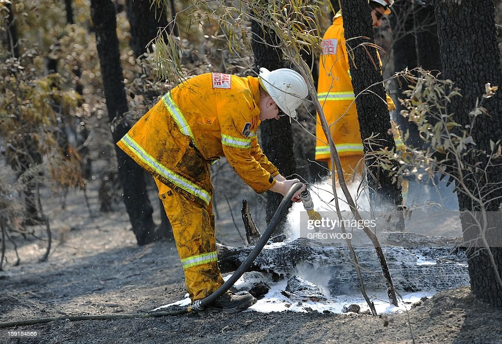 Firefighters douse burning logs from the Deans Gap fire near Nowra on the south coast of Australia's New South Wales state on January 9, 2013. Cooler conditions helped firefighters battling blazes across Australia on January 9 but up to 30 fires were still out of control. AFP PHOTO / Greg WOOD