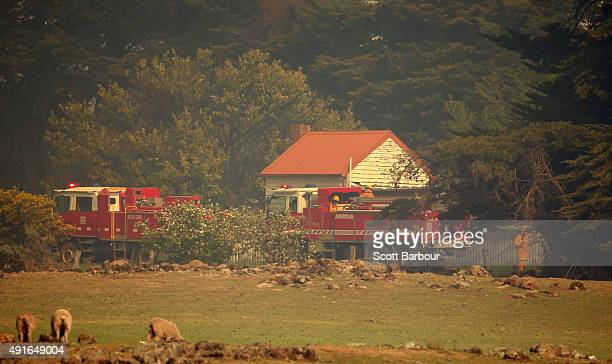 Firefighters fight a bushfire in Benloch Victoria on October 7 2015 near Melbourne Australia Victorian fire crews have been battling to contain a...