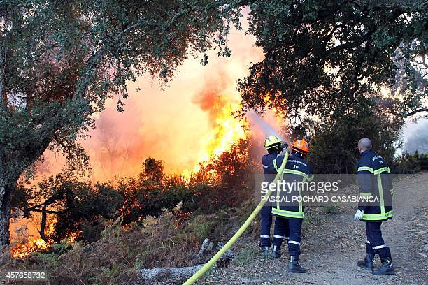 Firefighters try to extinguish a wildfire near Talasani Corsica on October 22 2014 The fire had spread rapidly due to high winds AFP PHOTO / PASCAL...