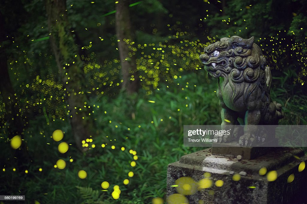 Fireflies swarm around a Japanese statue : Stock Photo