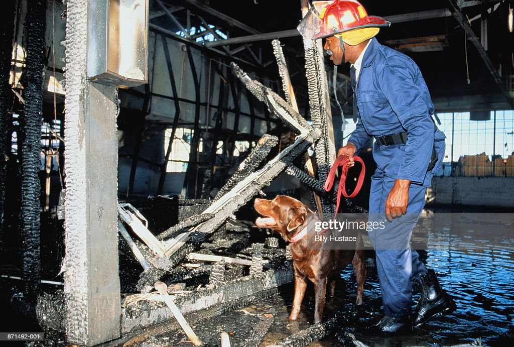 Fireman investigating fire scene, with dog