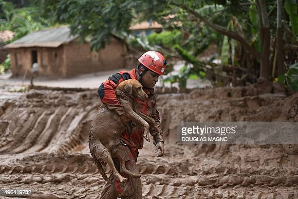 A fireman rescues in Paracatu de Baixo Minas Gerais Brazil on November 9 2015 a dog that was trapped in the mud that swept through the Village of...