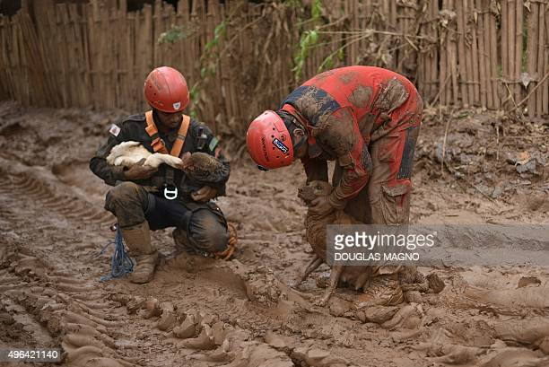 Firemen rescue a chicken a duck and a dog trapped in the mud in Paracatu de Baixo buried by an avalanche of mud and mining sludge in Minas Gerais...