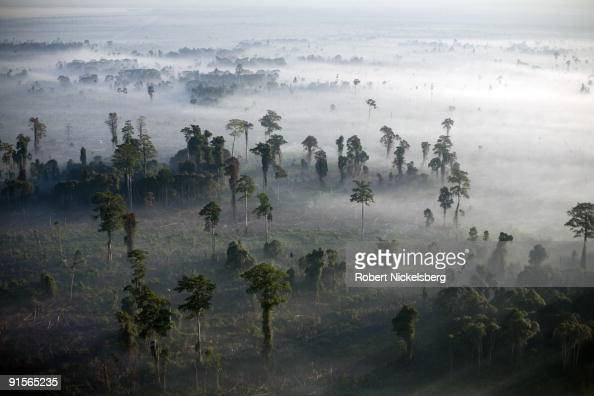 Fires burn off logged virgin rainforest spewing clouds of white smoke across tracts cleared to plant oil palm trees June 11 2009 in Tripa Aceh...