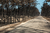 Fires in Portugal, Leiria pine forest great fire