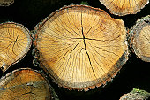 Firewood, extreme close-up