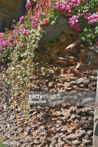 firewood : Stock Photo
