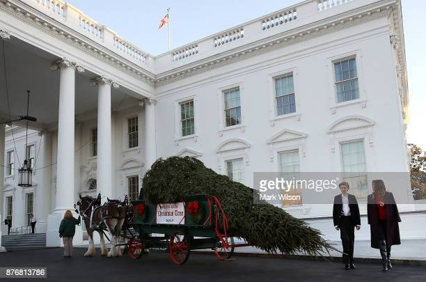 First lady Melania Trump and her son Barron inspect the 195foot balsam Fir that will serve as the official White House Christmas Tree at the White...