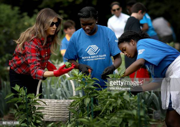 S first lady Melania Trump joins children from the Boys and Girls Club of Washington in planting and harvesting vegetables in the White House Kitchen...