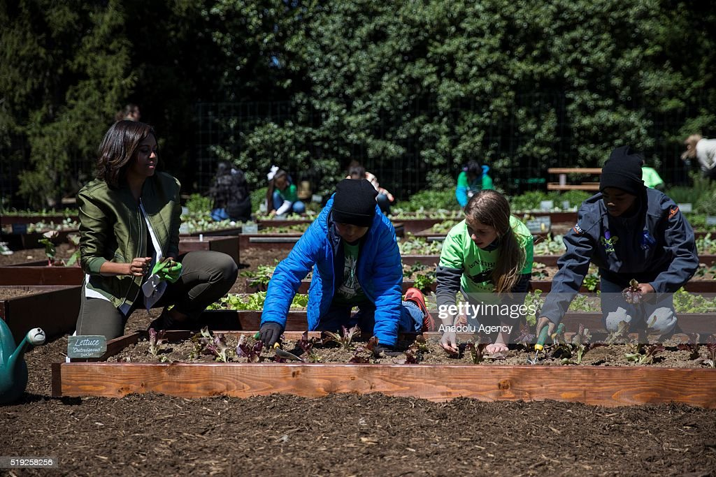 First Lady Michele Obama plants lettuce with Miles Frost Erin Hinson and Malik Robins in the 2016 White House Kitchen Garden in Washington USA on...