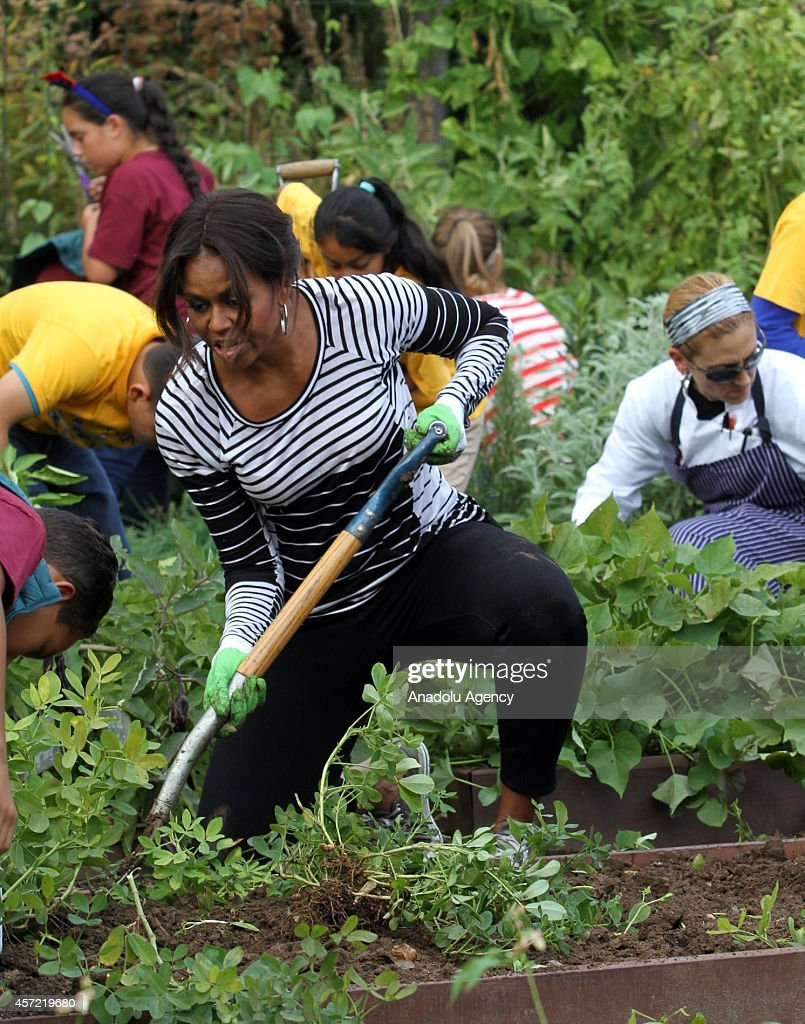 Michelle Obama Kitchen Garden In Focus Michelle Obama Flexes Her Green Thumb Photos And Images