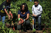 S first lady Michelle Obama participates with local students in the annual fall harvest of the White House Kitchen Garden October 6 2015 at the White...