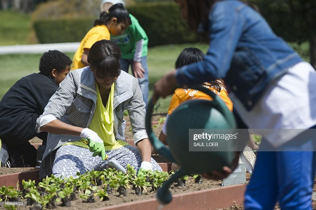 US First Lady Michelle Obama plants spinach in the White House Kitchen Garden on the South Lawn of the White House in Washington, DC, April 4, 2013. In what has become an annual event, Obama invites students from schools that have made large improvements in their school lunch programs, including schools from Florida, Massachusetts, Tennessee and Vermont. AFP PHOTO / Saul LOEB