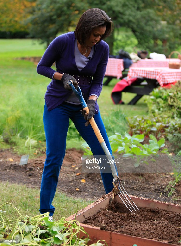 First Lady <a gi-track='captionPersonalityLinkClicked' href=/galleries/search?phrase=Michelle+Obama&family=editorial&specificpeople=2528864 ng-click='$event.stopPropagation()'>Michelle Obama</a> works in the garden harvesting vetables on the South Lawn of the White House on October 29, 2009 in Washington, DC. First Lady <a gi-track='captionPersonalityLinkClicked' href=/galleries/search?phrase=Michelle+Obama&family=editorial&specificpeople=2528864 ng-click='$event.stopPropagation()'>Michelle Obama</a> invited local school children to help with the fall vegetable harvest in the garden at the White House.