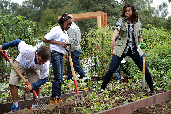S first lady Michelle Obama works with students to harvest sweet potatoes in White House Kitchen Garden on the South Lawn of the White House October...
