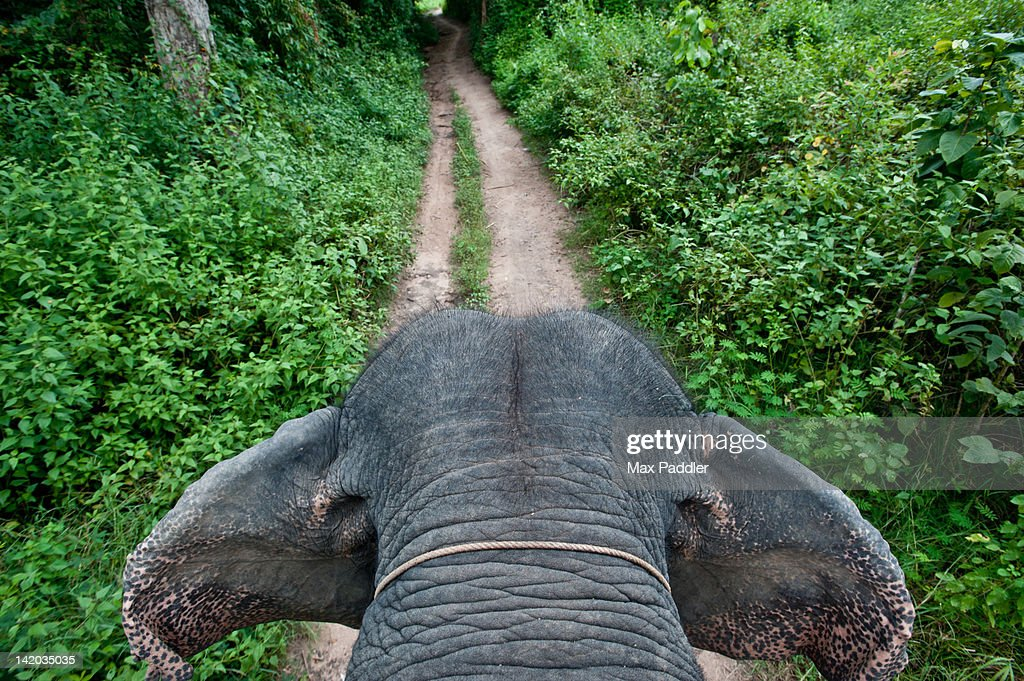 First person view of riding elephant in forest in Pai, Northern Thailand, Thailand.