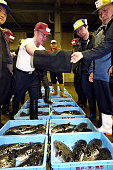 First puffer fish auction of the New Year takes place at the Haedomari Fish Market on January 4 2016 in Shimonoseki Yamaguchi Japan The auction is...