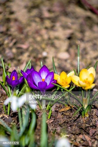 Primera Flores de primavera en el jardín : Foto de stock