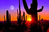 At Saguaro National Park, Tucson Arizona, right at sunset January 2015.