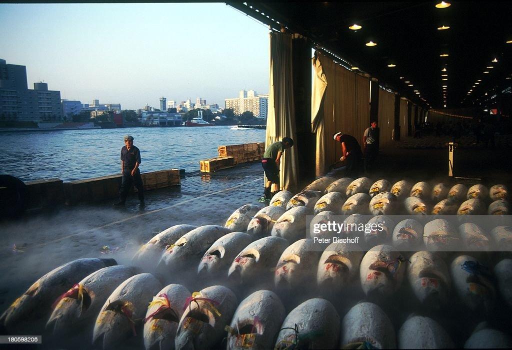 Fischmarkt Tsukiji Tokio Japan Asien Blick aufs Wasser Reise Fischauktion
