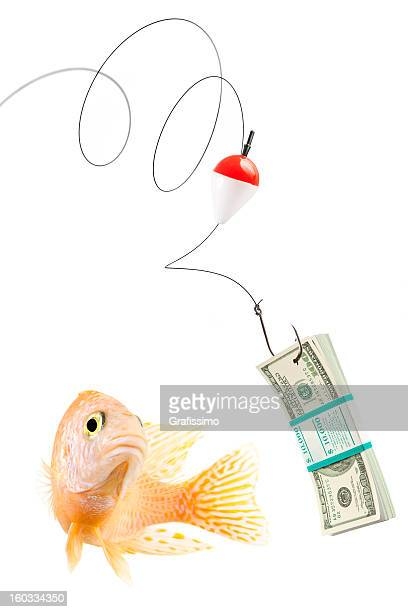 Fish about to bite fishing bait with 100 dollar bills