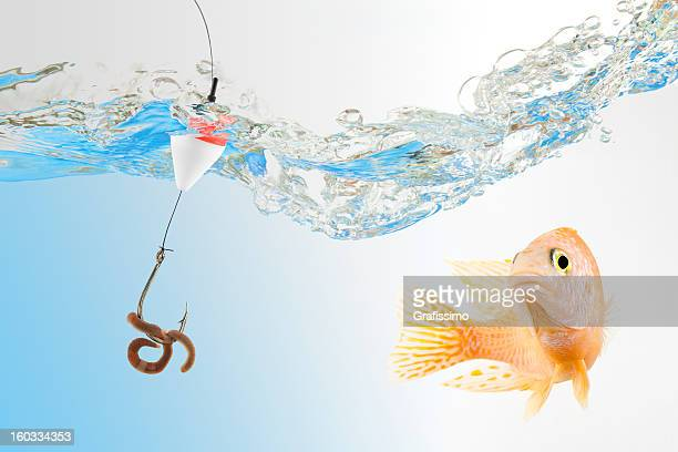 Fishing bait stock photos and pictures getty images for Fish bites bait