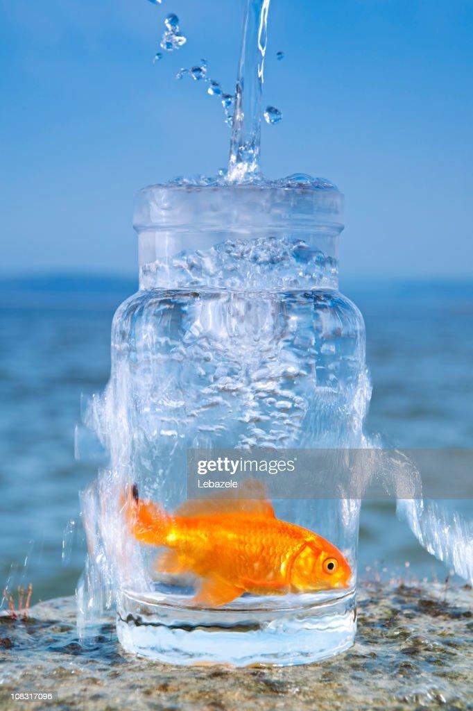 Fish and Fresh Water : Stock Photo