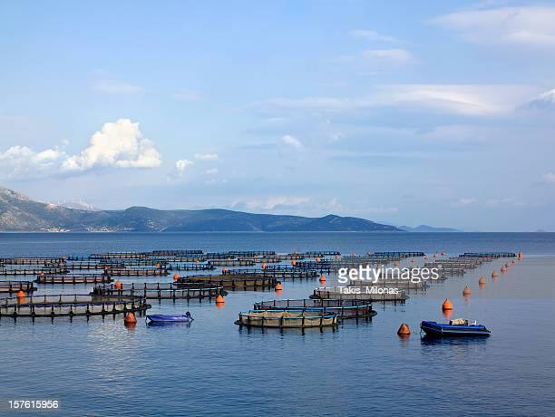 Fish and shrimp farms in the open sea