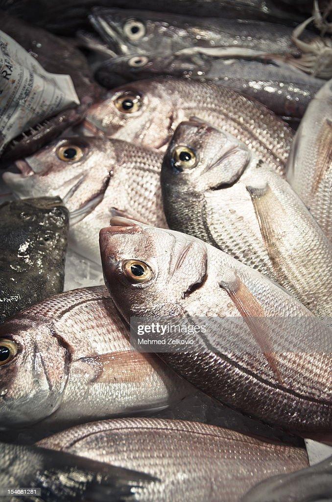 Fish at market : Stock Photo