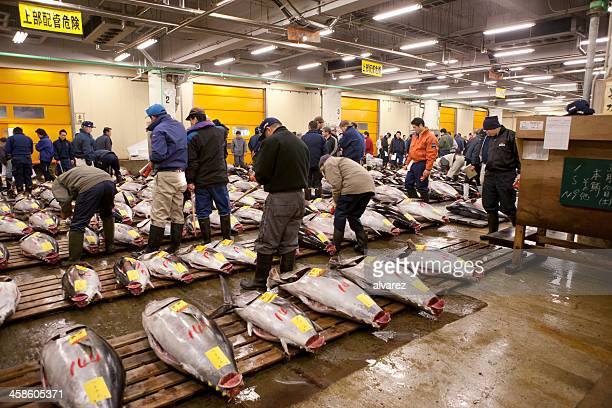 Fish buyers inspect tuna quality at Tokyo Fishmarket