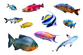 olored fish collection isolated on white background